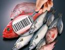 etichettatura_pesce