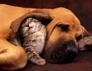 cibo-cane_gatto