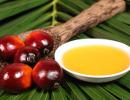 olio-palma