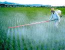 piante trattate con antibiotici