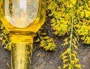 olio di colza e acido erucico