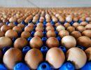 uova fipronil sicurezzalimentare